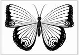 Butterfly Coloring Printable Fun Single Drawings Any Reproduce Resell Provided Form Personal Please Been Only These sketch template