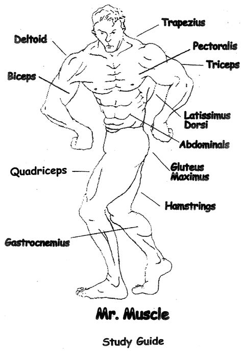 skeletal and muscular systems christian homeschooling