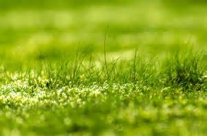 of grass green grass free stock photo public domain pictures