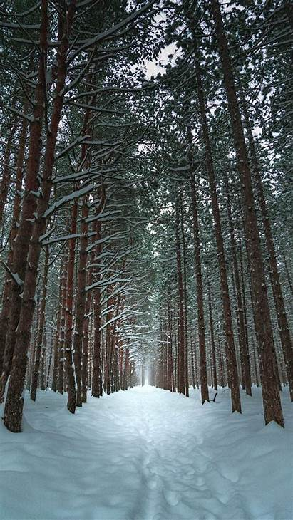 Forest Winter Snow Trees Trail Iphone Background