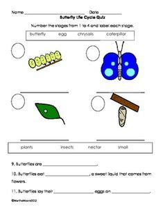 1000 images about 2nd grade science life cycles on