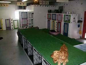 Animal house dog cat boarding medicine hat ab po for Red dog daycare