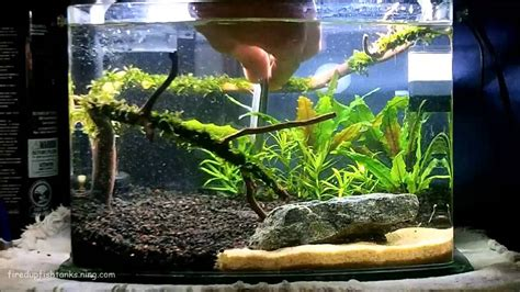 Aquascape Ideas by 3 Gallon Planted Fishtank How To Aquascape
