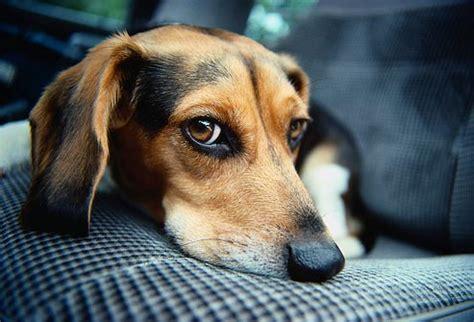 common health problems  popular dog breeds