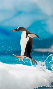 20 Wonderful Animal iPhone 5 Wallpapers - DotCave