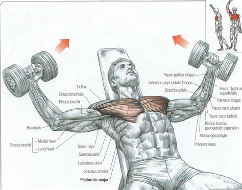 Pec Deck Fly Muscles Worked by 95 Of All Trainers Don T Correct Exercise Form