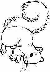 Squirrel Coloring Pages Clipart Acorn Squirrels Print Printable Colouring Cute Animals Cliparts Clip Baby Animal Nuts Cartoon Library Am Clipartpanda sketch template