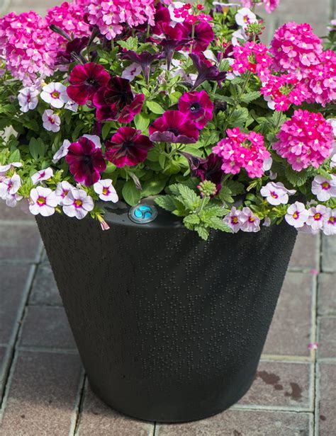 Ideas For Container Gardening & Drip Irrigation For Pots