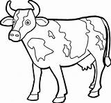 Cow Coloring Pages Printable Adults sketch template