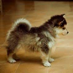 small dogs on pinterest small dog breeds dog breeds and