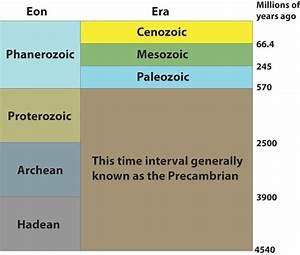 Fossils 3 6