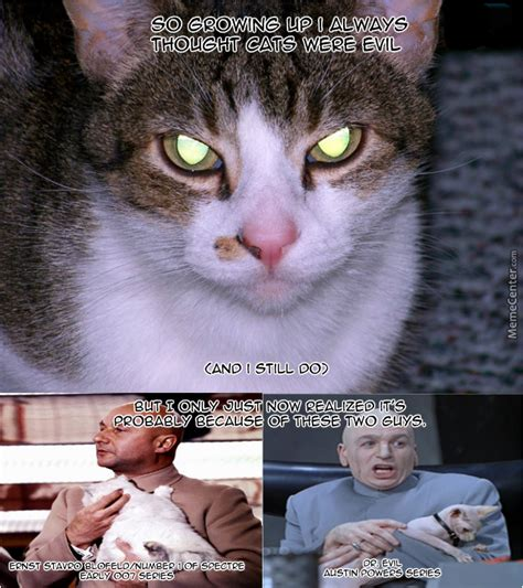 evil cats why meme