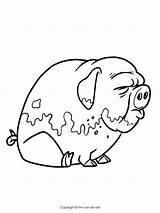 Pigs Coloring Pages Three Pig Drawing Story Getdrawings Printable Piggies Peppa sketch template