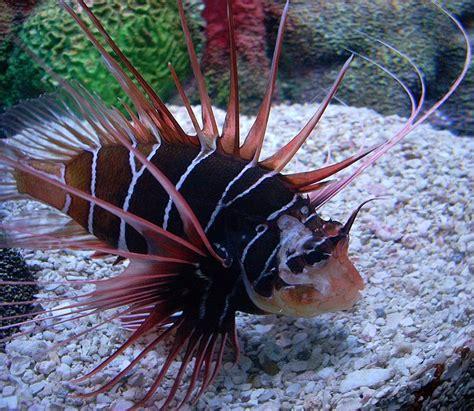 le plus beau poisson d aquarium page 2