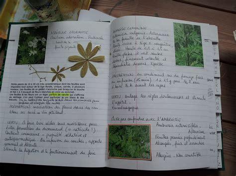 la cuisine des plantes sauvages outil de cueillette des plantes sauvages comestibles