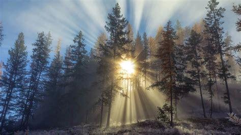papel de parede natureza raios de luz na floresta