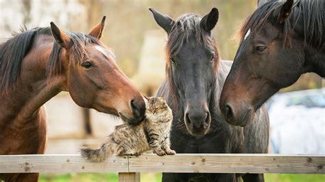 Kotek w towarzystwie koni