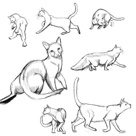 cat poses study  flamefoxe  deviantart