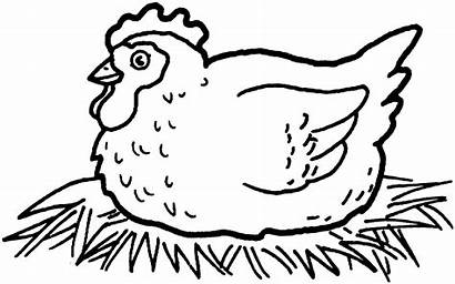 Coloring Pages Chicken Chickens Clipart Colour Clip