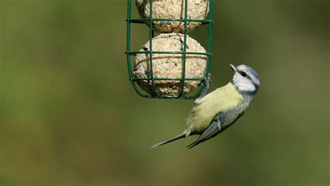 the rspb news why are my bird feeders full