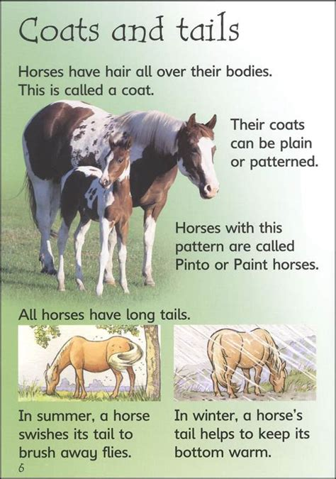 ponies horses usborne beginners wild