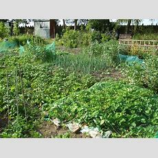 July Allotment Tips  Suttons Gardening Grow How