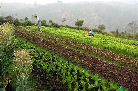 ระบบการเกษตรที่ยั่งยืน: เกษตรอินทรีย์
