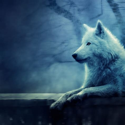 And Wolf Wallpaper Hd by Wolves Wallpaper Hd Wallpapers For Pc Mac
