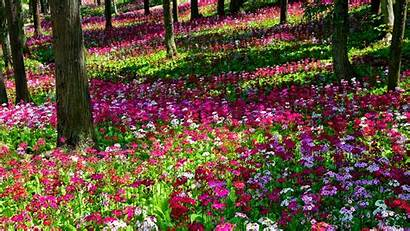 Flower Garden Awesome