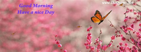 facebook cover image beautiful butterfly thequotesnet