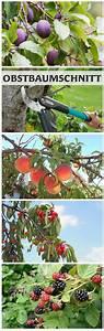 Apfelbaum Für Balkon : die besten 25 obstbaumschnitt ideen auf pinterest ~ Michelbontemps.com Haus und Dekorationen