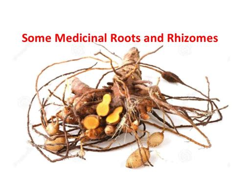 what are rhizomes some medicinal roots and rhizomes