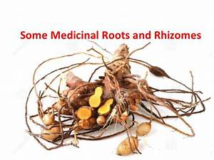 Some medicinal roots and rhizomes