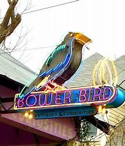 Bower Bird Antiques & Curiosities 샌마커스 Bower Bird