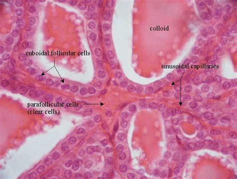 anatomyphysiology flashcards  proprofs