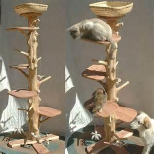 cat climber one of a cedar cat climbing tree the green