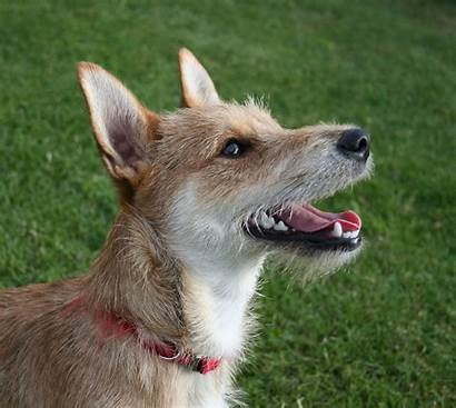 Breed Mixed Dogs Dog Animal Eat Stat