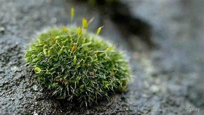 Moss Plant Water Stone Watermark