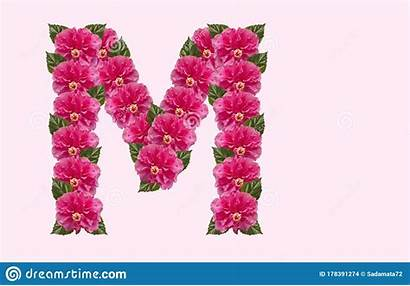 Letter Flower Hibiscus Alphabet Double Rose Isolated