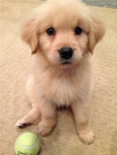 253 Best Images About Puppies On Pinterest