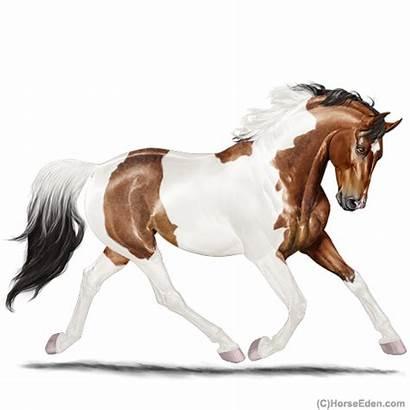 Horse Eden Paint Aries Eventing Epp Horseeden