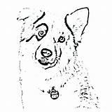 Shepherd Australian Coloring Pages Dog Cattle Getdrawings Printable Getcolorings Toy Colorings sketch template