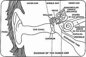 Protecting Your Ears - Start Now