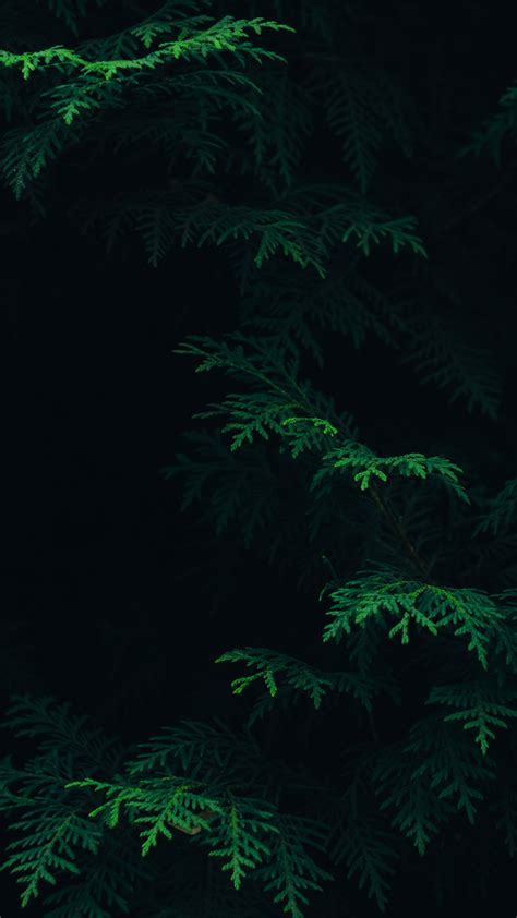 Here are only the best android dark wallpapers. PAPERS.co | iPhone wallpaper | vs89-tree-leaf-green-pattern-nature-dark