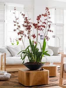 Deko Für Ecken : rendezvous mit orchideen zuhause wohnen ~ Michelbontemps.com Haus und Dekorationen
