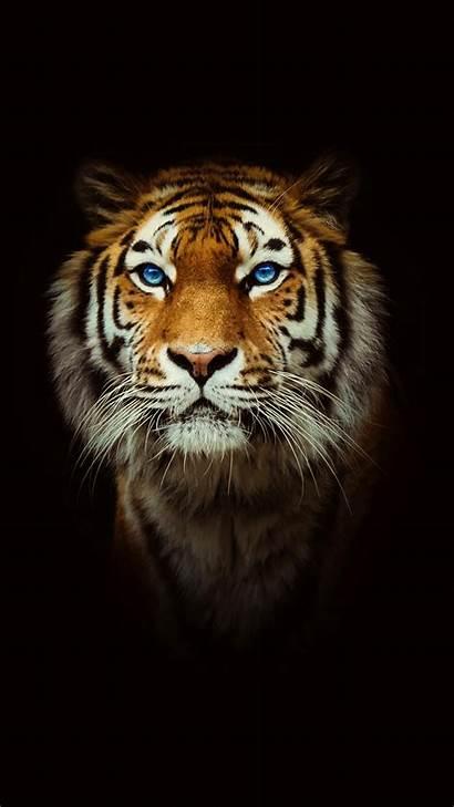 Tiger Iphone
