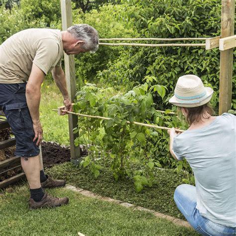 Garten Pflanzen Himbeeren by Rankhilfe F 252 R Himbeeren Selber Bauen Gartentipps