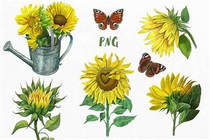 Clipart Sunflowers Sunflower Yellow Flowers Illustrations Thehungryjpeg