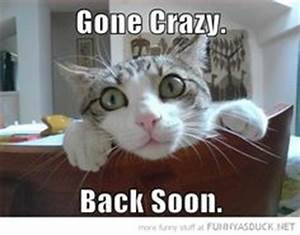 Crazy cat pictures, Crazy cat lady and Crazy cats on Pinterest
