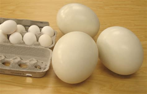 Phony Ostrich Eggs